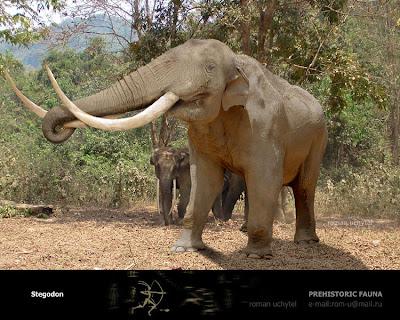 elefantes extintos Stegodon