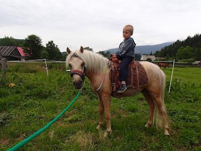 konie, kuce, jazda konna, ujezdzanie, Orawa, Babia Góra