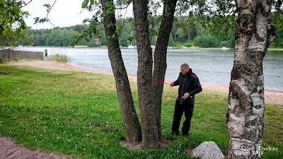 Windom asennusta, heittopainoilla oksan yli ja sitten naruilla antennin veto ja kiristys puiden väliin.