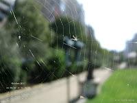 Fond d'écran octobre 2011 - Toile d'araignée parisienne