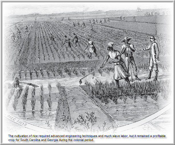 S T R A V A G A N Z A: COLONIAL AGRICULTURE IN THE U.S.