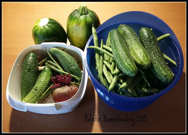 Homesteading Harvest
