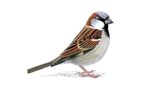 Sparrows - Sunday LSD runners