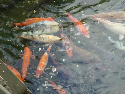 Parque temático Busch Gardens - Tampa - Florida