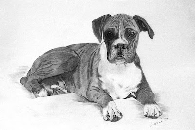 Boxer Dog, Canine, Pet, Animal, Pet Portrait, Graphite Drawing, Traditional, Art