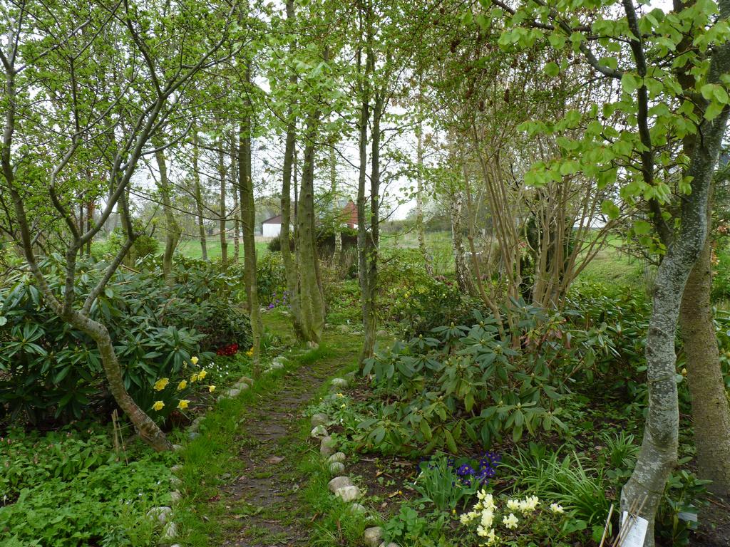 planter i skovbunden