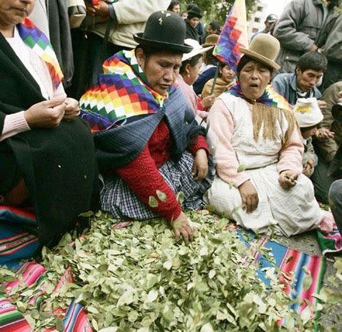 La Hoja de Coca en Peru