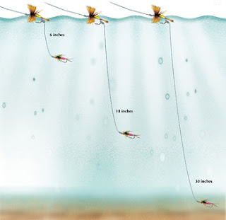 The length of a nymph dropper should be determined by where the fish are feeding in the water column. If trout are taking nymphs right below the surface, a 6-inch dropper will put the fly in the right zone. Earlier in the hatch, before there are many duns on the water, an 18-inch dropper may take more fish. If you want the fly right near the bottom, a 30-inch dropper will do the trick in shallow water.