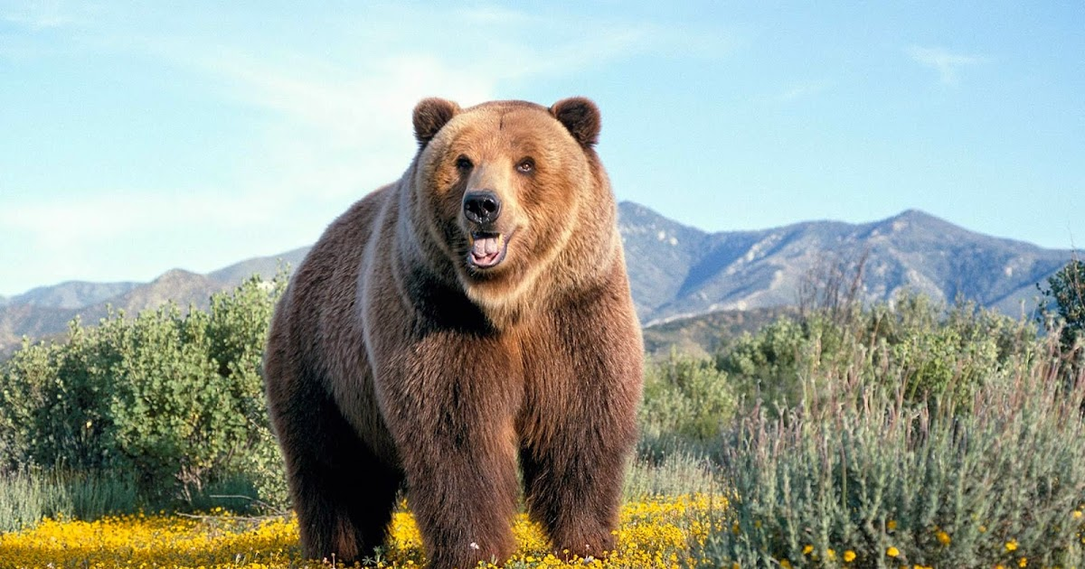 Download free Bear Wallpapers for your desktop | Most
