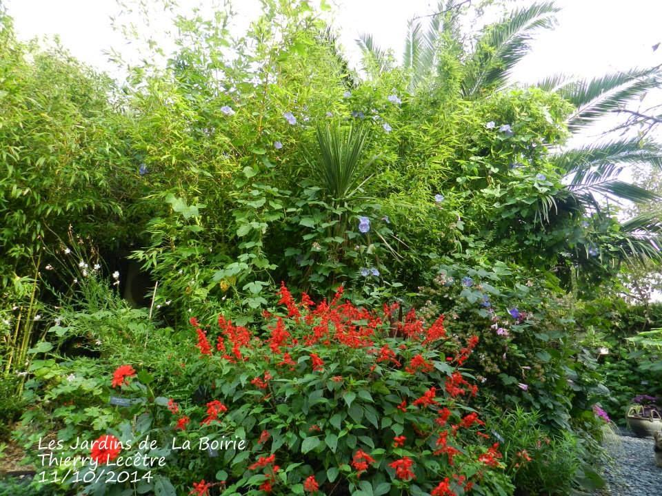 Samedi 11 octobre dans le jardin les jardins botaniques for Jardin octobre