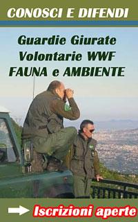 GUARDIE WWF