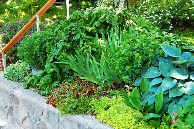 Toronto Gardens Pushing the limits of dry shade