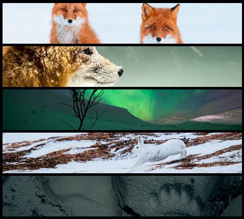 fotos de naturaleza Ivan Kislov
