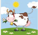 Vaca Florida
