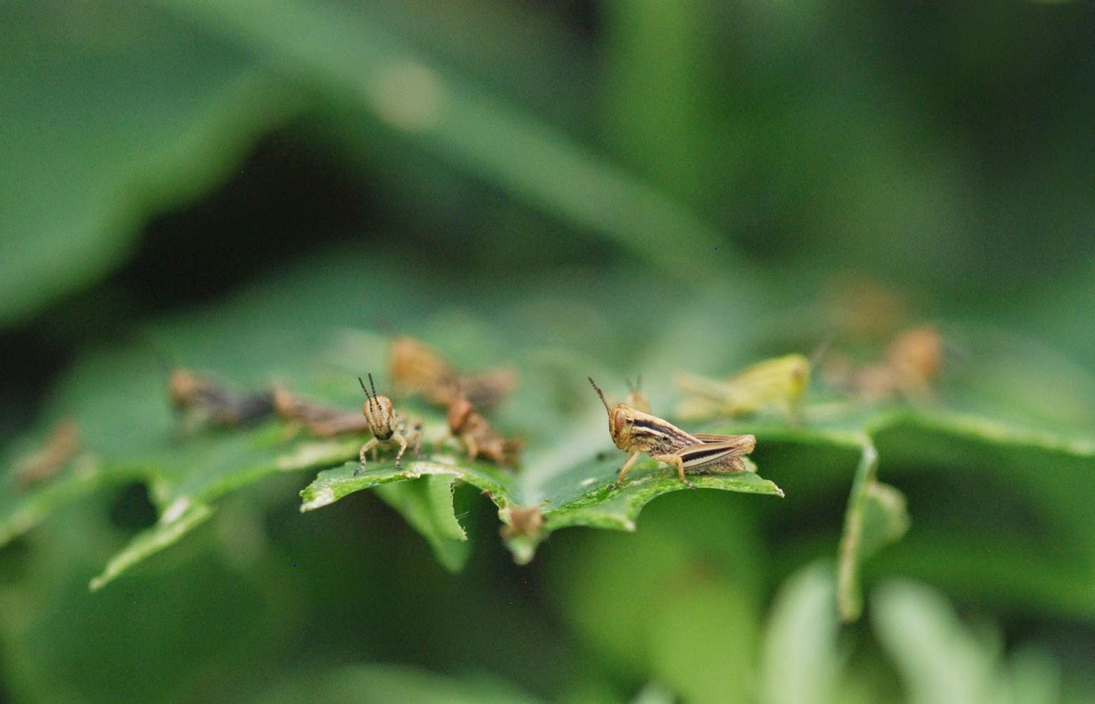 Gaia Garden: Jungle on...