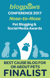 Best Cause Blog Finalist 2017
