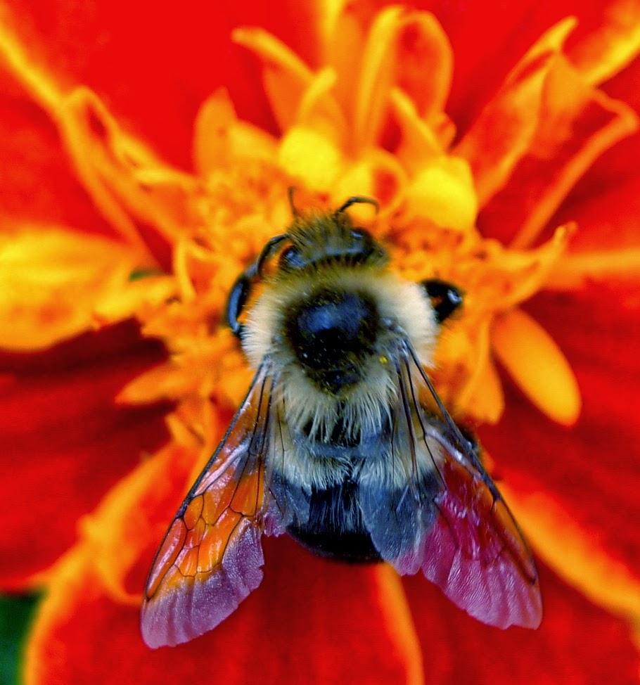 Beekeeping URI Master Gardener
