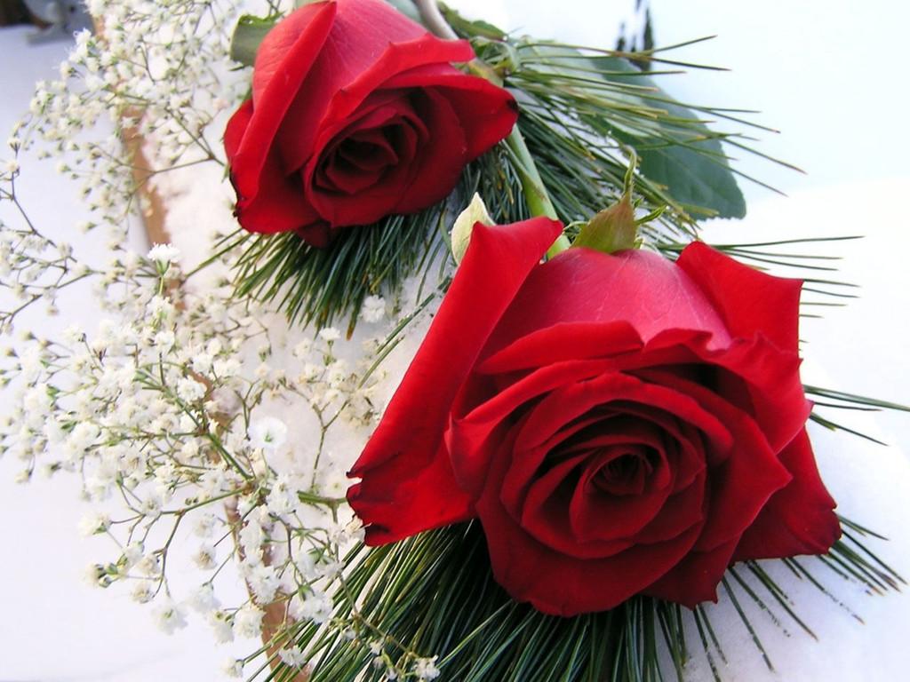 http://3.bp.blogspot.com/-vzoxW6LCB6Q/T7xSVSrheSI/AAAAAAAABpQ/z8NMebDVOss/s1600/rose+flowers+wallpaper+desktop4.jpg