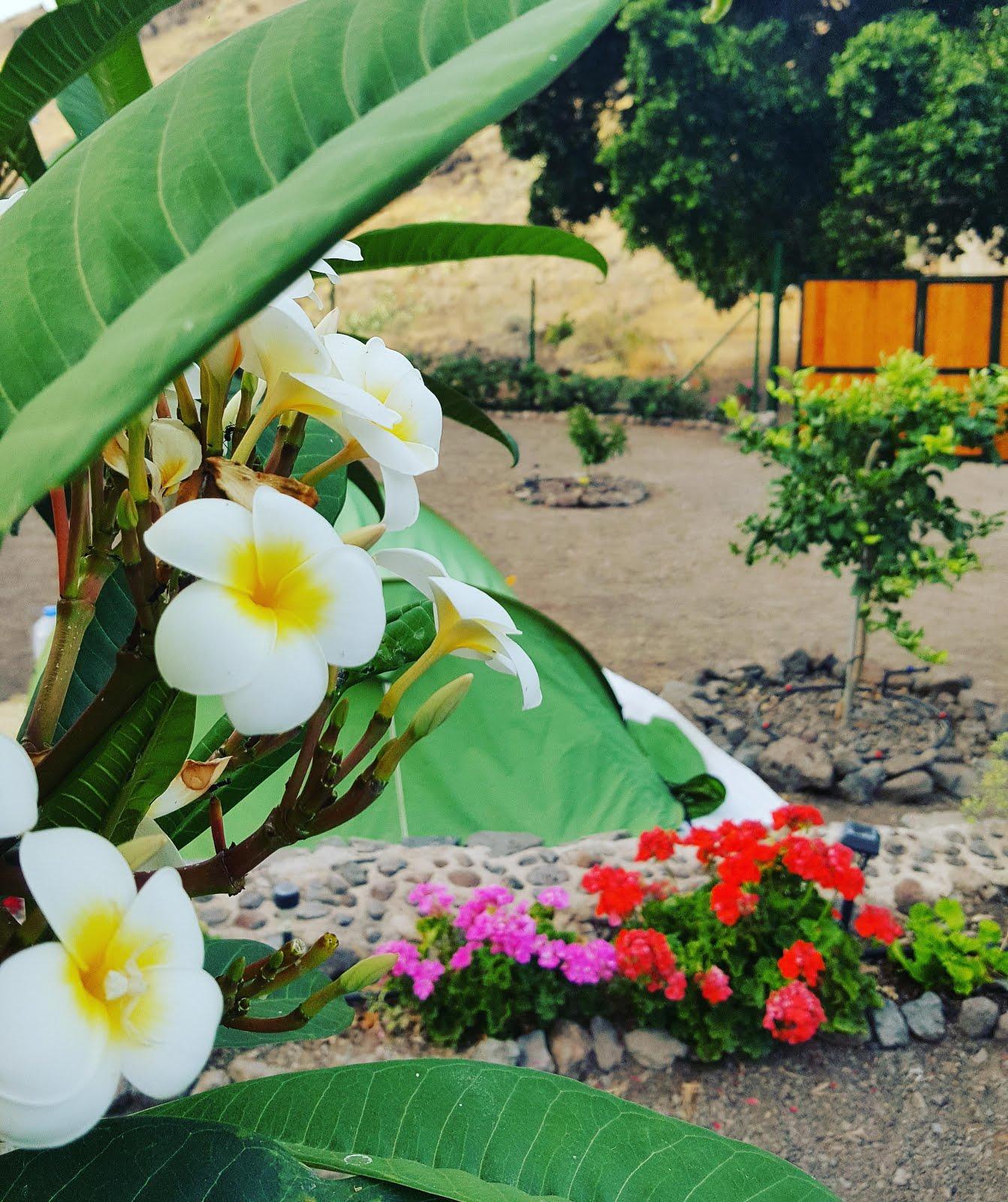 Hawaii en Veneguera