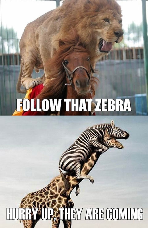 Follow That Zebra - Hurry Up They Are Coming