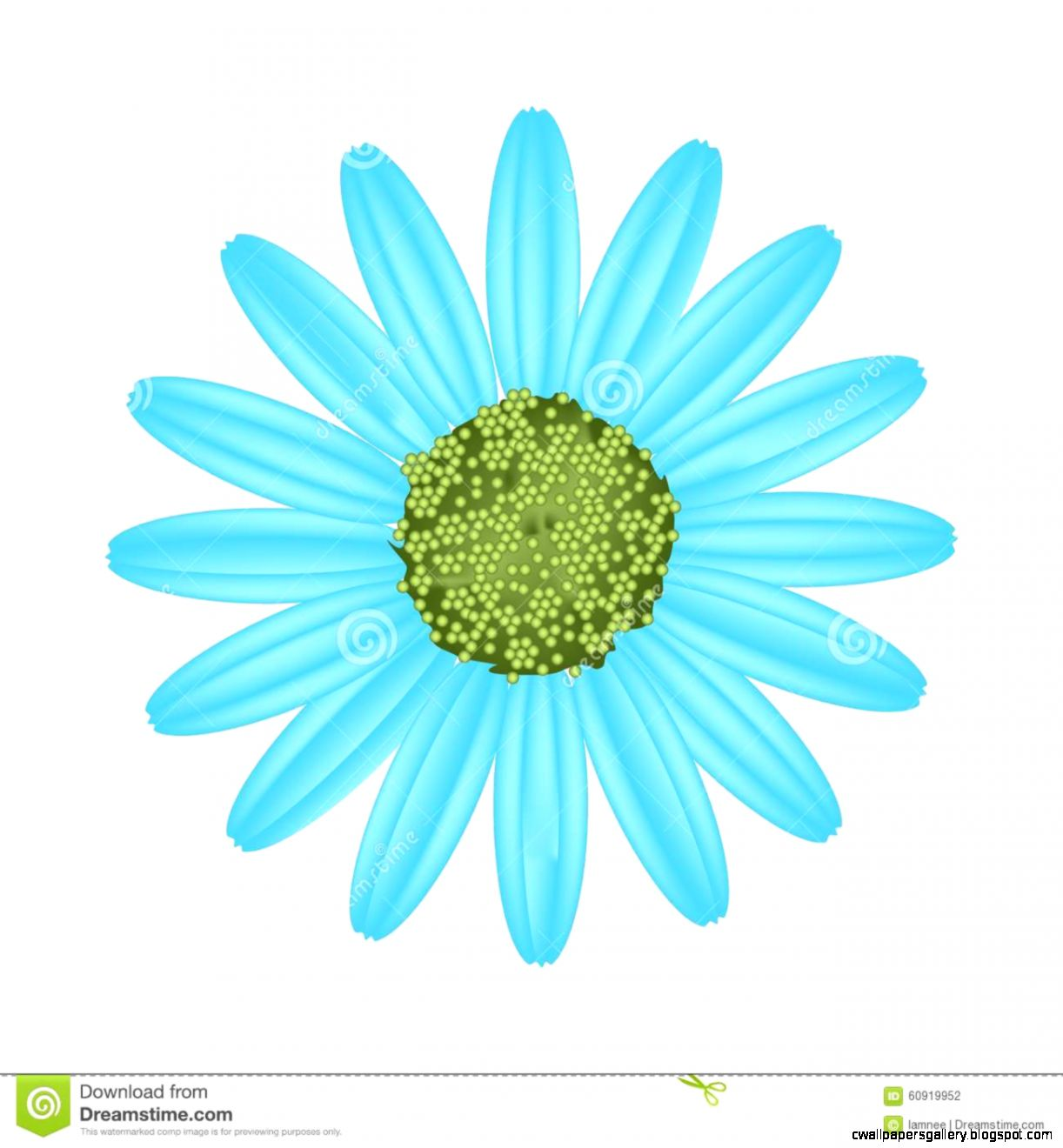 Light Blue Daisy Flower On White Background Stock Vector   Image