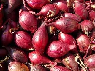 Bawang Merah Kandungan dan Manfaat Bawang Merah bagi Kesehatan