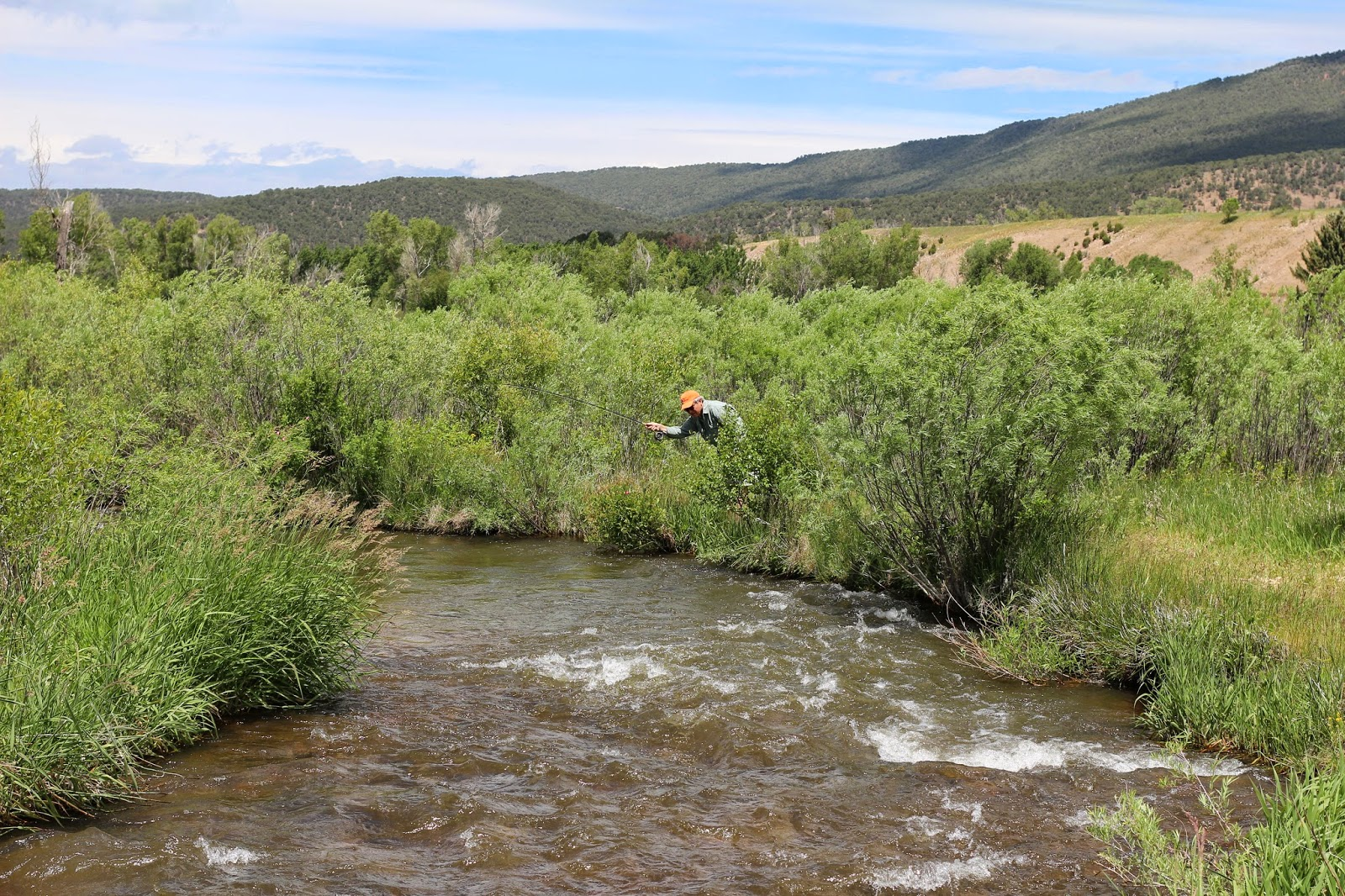 Fly+Fish+for+brown+trout+in+Colorado+with+Jay+Scott+Outdoors+4.JPG