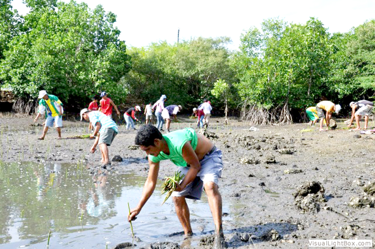 mangrove swamps importants essay Why should we protect mangroves mangroves, admittedly, are not only important but crucial for the coastal areas since estuarine areas are highly populated.