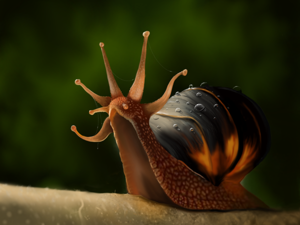 13-The-King-Snail-Jaime-Sanjuan-Ocabo-The Beauty-of-Paintings-in-Digital-Art-www-designstack-co