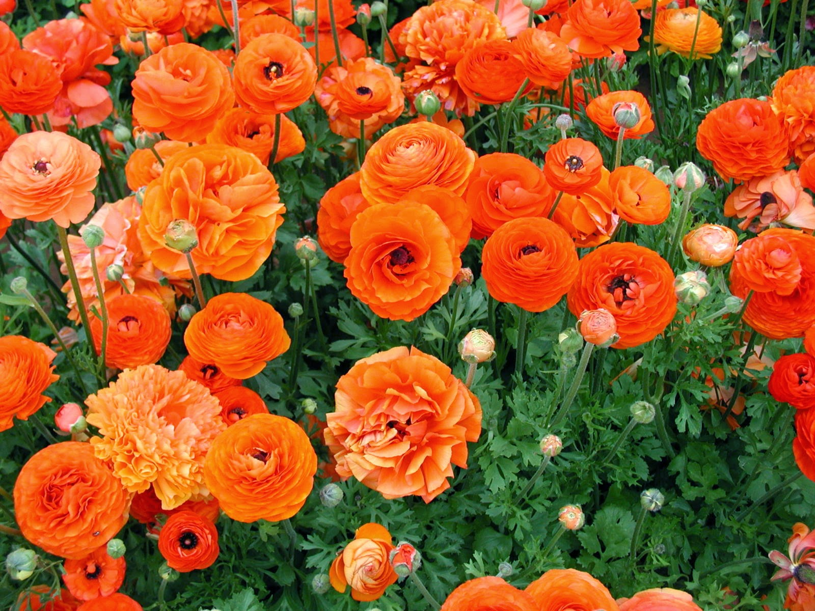 La Farm Girl Its Spring Let The Cagrown Flower Love Continue