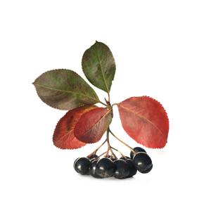 Organic Aronia Berry (Chokeberry) Extract