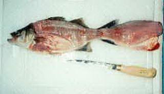 Ikan Asin Paling Laris di Indonesia