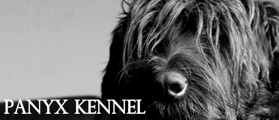 .....Panyx kennel.....