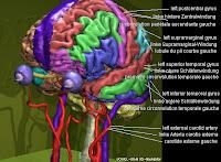 3d Brain3