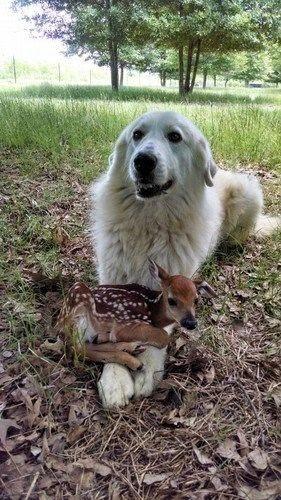 3 Cute Dogs