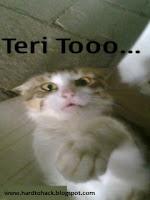 teri+to+Desi+Emotion
