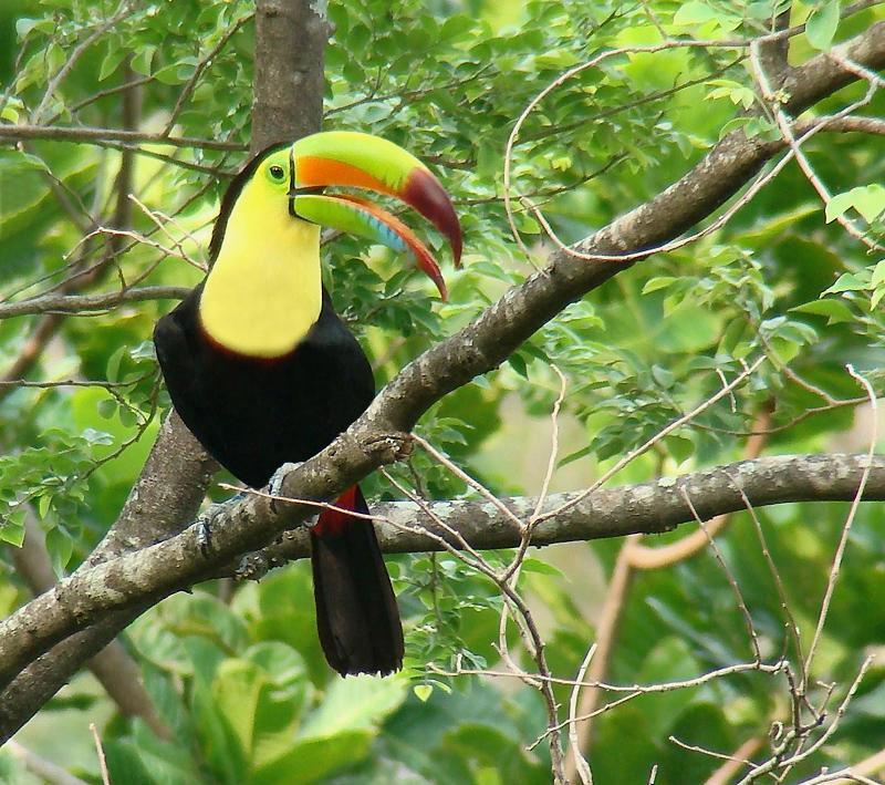 Toucan Eggs Tags: toucan broadband