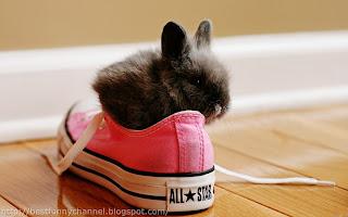 Very funny bunny.
