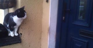 Un Chat ouvre la porte d'une maison