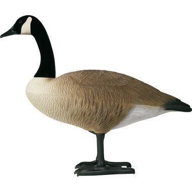 Canadian goose decoys