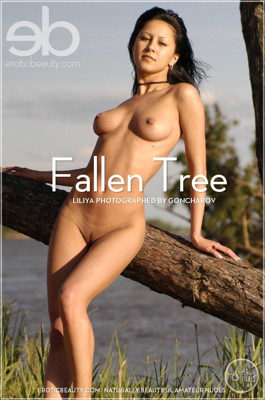 PdvoticBeauth 2012-05-09 Liliya - Fallen Tree 04210