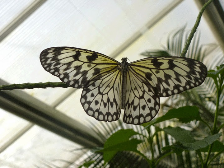 tropical butterfly Chester Zoo