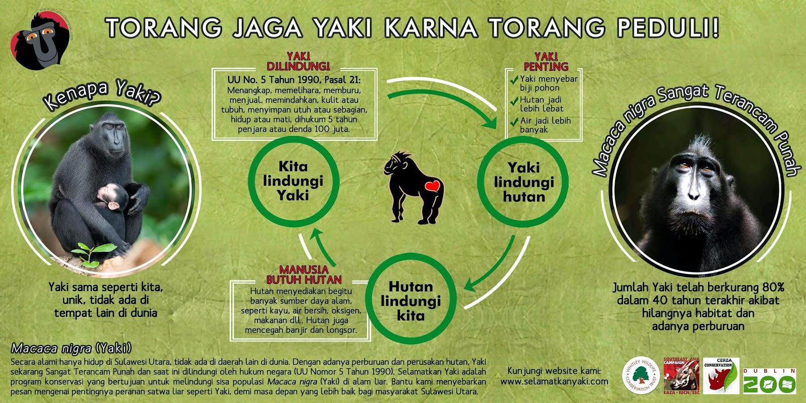 Mengapa Kita Perlu Melindungi Yaki (Macaca Nigra)