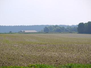 Keltenschanze Buchendorf von Norden