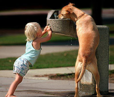 child helps dog get a drink at water fountain