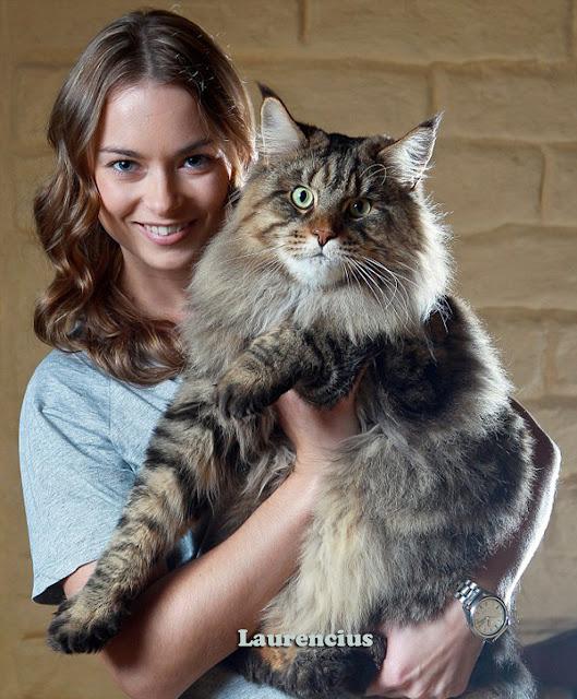 Rupert-Mammoth-Cat-Si-Kucing-Raksasa-Maine-Coon_4