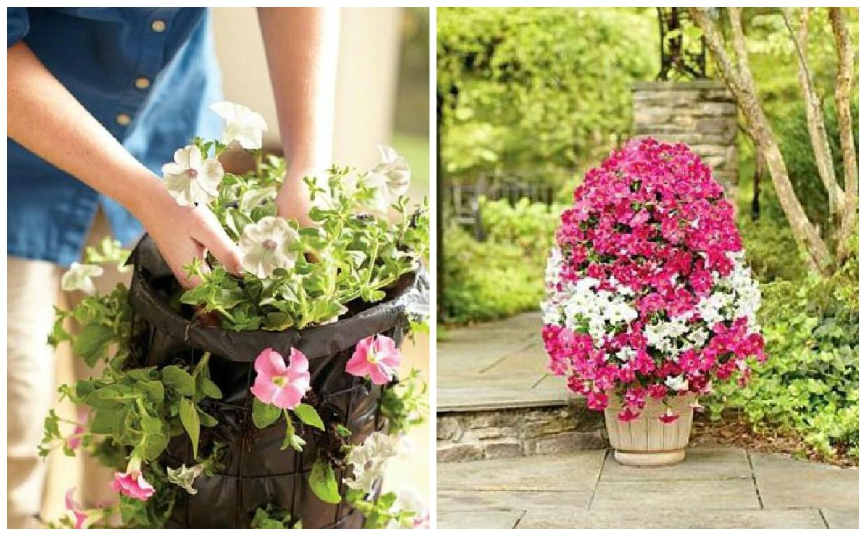 C mo poner lindas flores en macetas cositasconmesh for Como hacer mi jardin