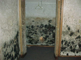 mold removal machine