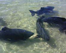 Lagoa Azul - Abaís - Sergipe