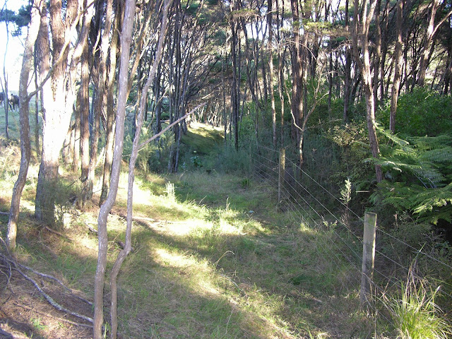Bush trees fence manuka fern flax